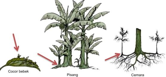 Perkembangbiakan Tumbuhan Generatif Dan Vegetatif Dosenbiologi Com