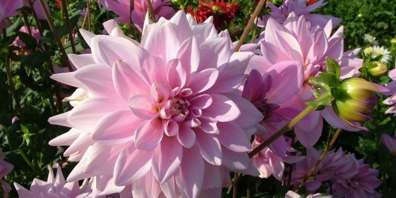 13 Bunga Paling Indah Di Dunia Beserta Gambarnya Dosenbiologi Com