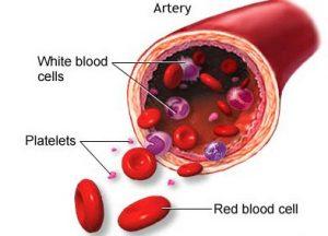 contoh jaringan darah