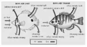 adaptasi ikan air tawar dan air laut