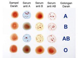 uji-golongan-darah
