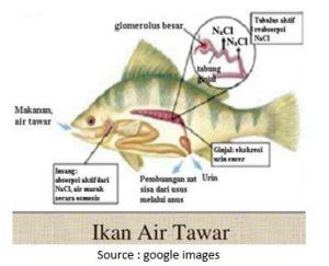 ikan-air-tawar-2