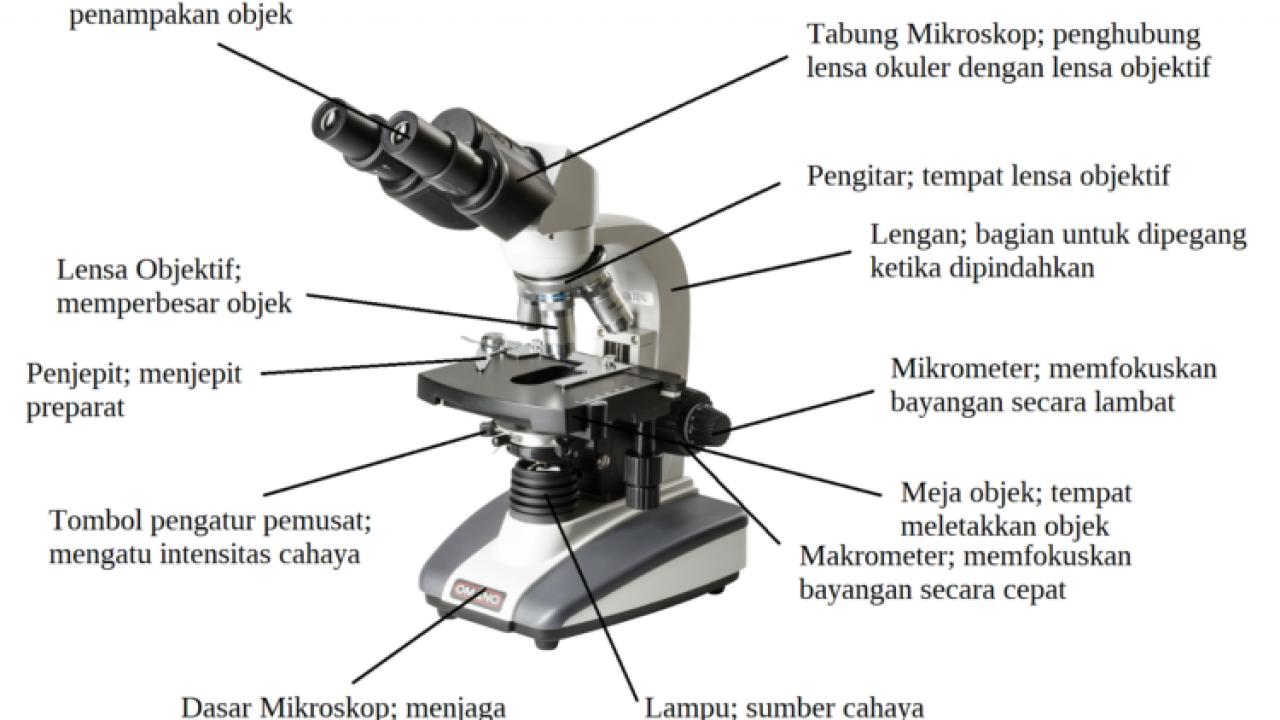 15 Bagian Bagian Mikroskop Dan Fungsinya Dosenbiologi Com