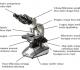 15 Bagian Bagian Mikroskop dan Fungsinya