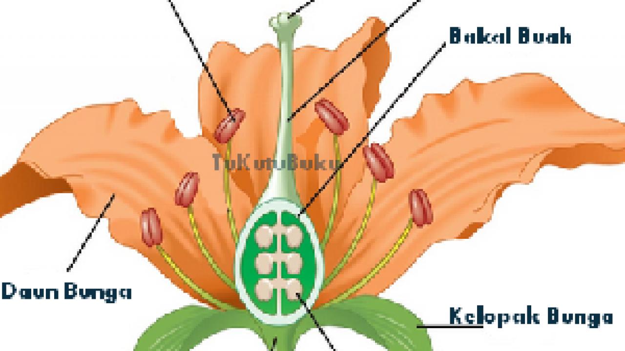 12 Ciri Ciri Bunga Sempurna Dan Tidak Sempurna Dosenbiologi Com