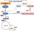 Metabolisme Lemak dalam Tubuh
