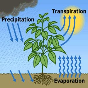 Manfaat Respirasi bagi Tumbuhan