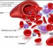 Pengertian Darah dan Fungsinya