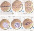 Pembelahan Sel : Amitosis, Mitosis dan Meiosis