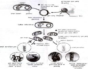 Rekayasa Genetika : Konsep, Langkah, Perbandingan dan Pro Kontra