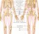 Sistem Muskuloskeletal Manusia dan Fungsinya