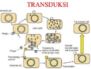 transudksi