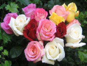 Morfologi Bunga Mawar Klasifikasi Dan Manfaatnya Dosenbiologi Com