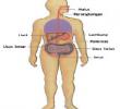 Proses Pencernaan Makanan Secara Singkat dari Mulut sampai Usus