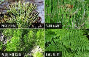 20 Ciri Ciri Tumbuhan Secara Umum dan Manfaat Tumbuhan