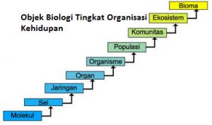 Tingkatan Molekul dan Sel