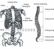 Tulang Penyusun Rangka Manusia Terlengkap