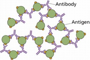 antibodi-dan-antigen