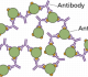 Pengertian Antigen dan Antibodi – Struktur dan Fungsi