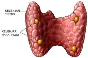 kelenjar-paratiroid