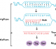 Proses Sintesis Protein Terlengkap