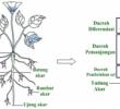 Struktur Dan Fungsi Jaringan Akar pada Tumbuhan Beserta Gambarnya