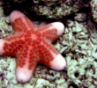 Pengertian Echinodermata Secara Umum dan Contohnya Terlengkap