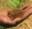 15 Tanah Yang Cocok Untuk Pertanian di Pulau Jawa