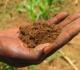 Tanah Yang Cocok Untuk Pertanian dan Perkebunan