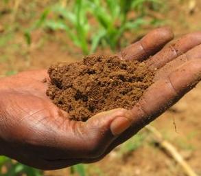 tanah-yang-cocok-untuk-pertanian