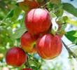 12 Tumbuhan Yang Hidup Di Dataran Tinggi dan Rendah