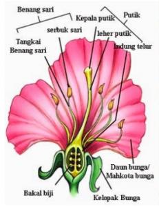 anatomi-bunga-sepatu