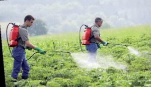 dampak penggunaan pestisida