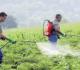 Dampak Penggunaan Pestisida Secara Berlebihan