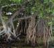 Fungsi Hutan Mangrove Bagi Kehidupan Manusia