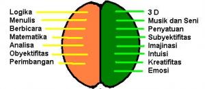 Perbedaan Fungsi Otak Kanan dan Otak Kiri Manusia