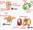 Sistem Organ Pada Tumbuhan dan Fungsinya
