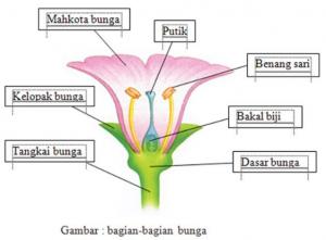 Struktur Anatomi Bunga dan Fungsinya