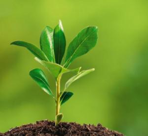 manfaat-biologi-di-bidang-lingkungan