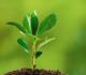 Manfaat Biologi di Bidang Lingkungan