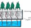 Cara Bertanam Hidroponik Bagi Pemula