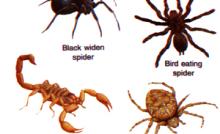12 Contoh Hewan Avertebrata Dan Vertebrata Terlengkap Dosenbiologi Com